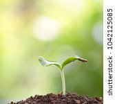 small tree growing | Shutterstock . vector #1042125085