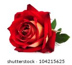 Stock photo red rose isolated on white background 104215625