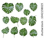 set of monstera leave texture...   Shutterstock . vector #1042158025