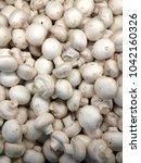 champignon harvest. white... | Shutterstock . vector #1042160326