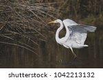 great white egret   Shutterstock . vector #1042213132