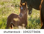 horse foal on pasture. a herd... | Shutterstock . vector #1042273606