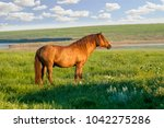 the wild horse  equus ferus  in ... | Shutterstock . vector #1042275286