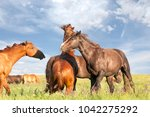 fighting wild stallions on... | Shutterstock . vector #1042275292