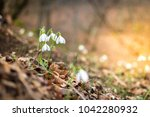 forest in the beginning of...   Shutterstock . vector #1042280932