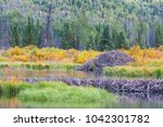 the north american beaver or...   Shutterstock . vector #1042301782