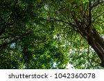 the silhouette of tree stands... | Shutterstock . vector #1042360078