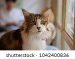 cat looking at camera | Shutterstock . vector #1042400836