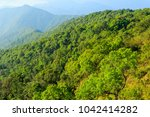 rainforest  africa  rainforest  ... | Shutterstock . vector #1042414282
