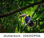 a beautiful bird | Shutterstock . vector #1042429936