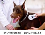 control chip at dogs neck ... | Shutterstock . vector #1042498165