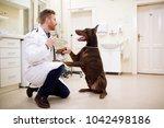 friendship between veterinarian ...   Shutterstock . vector #1042498186