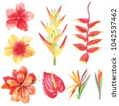 set of watercolor tropical... | Shutterstock . vector #1042537462