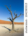 deadvlei  dead trees at... | Shutterstock . vector #1042585315