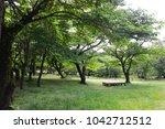quiet forest. peaceful woods.   Shutterstock . vector #1042712512