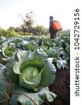 Small photo of agriculturist go to harvest