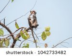 wildlife monkey try to find... | Shutterstock . vector #1042733482