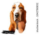 basset hound or hush puppy... | Shutterstock . vector #1042780852