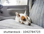 Scarred Dog At Backseat