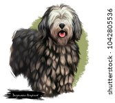 bergamasco shepherd  pastore... | Shutterstock . vector #1042805536