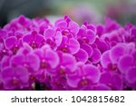 purple orchid flowers blooming | Shutterstock . vector #1042815682