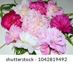 beautiful peonies flowers... | Shutterstock . vector #1042819492
