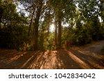 Small photo of Mon Repo Forest vergin nature