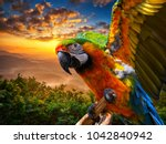Macaw Sitting On A Branch ....