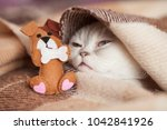 Stock photo portrait of fluffy white cat on sofa with brown plaid close up cat play with dog toys dog 1042841926