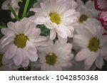 white chamomile with droplets ... | Shutterstock . vector #1042850368