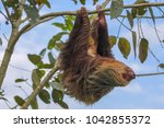 a sloth in the cahuita national ... | Shutterstock . vector #1042855372