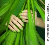 woman hands with green nail... | Shutterstock . vector #1042888552