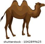 vector mongolian bactrian camel | Shutterstock .eps vector #1042899625
