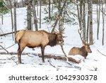 elk rattling next to his friend | Shutterstock . vector #1042930378