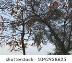 terminalia catappa leaves or...   Shutterstock . vector #1042938625