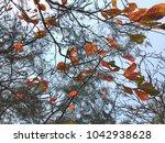 terminalia catappa leaves or...   Shutterstock . vector #1042938628