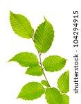 leaves background | Shutterstock . vector #104294915