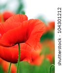 Field Of Poppies. Macro Image.