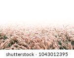Grass Flower Background  Winter ...