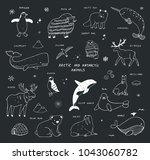 arctic and antarctic polar... | Shutterstock .eps vector #1043060782