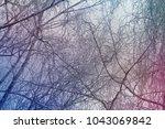 winter branches background   Shutterstock . vector #1043069842