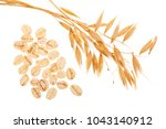 Small photo of oat spike with oat flakes isolated on white background. Top view