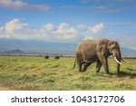 african elephant on the masai... | Shutterstock . vector #1043172706