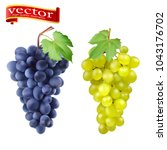 red and white table grapes ... | Shutterstock .eps vector #1043176702