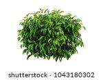 tropical plant flower bush tree ... | Shutterstock . vector #1043180302