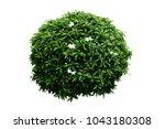 flower bush tree isolated... | Shutterstock . vector #1043180308