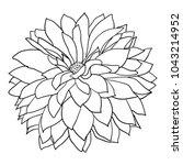 beautiful monochrome sketch ... | Shutterstock .eps vector #1043214952
