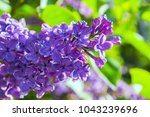 spring background with blooming ...   Shutterstock . vector #1043239696
