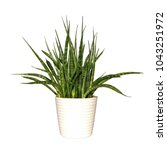 Plant Potted Plant Isolated On...