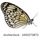 Stock photo a paper kite butterfly rice paper butterfly or large tree nymph idea leuconoe isolated on white 1043273872
